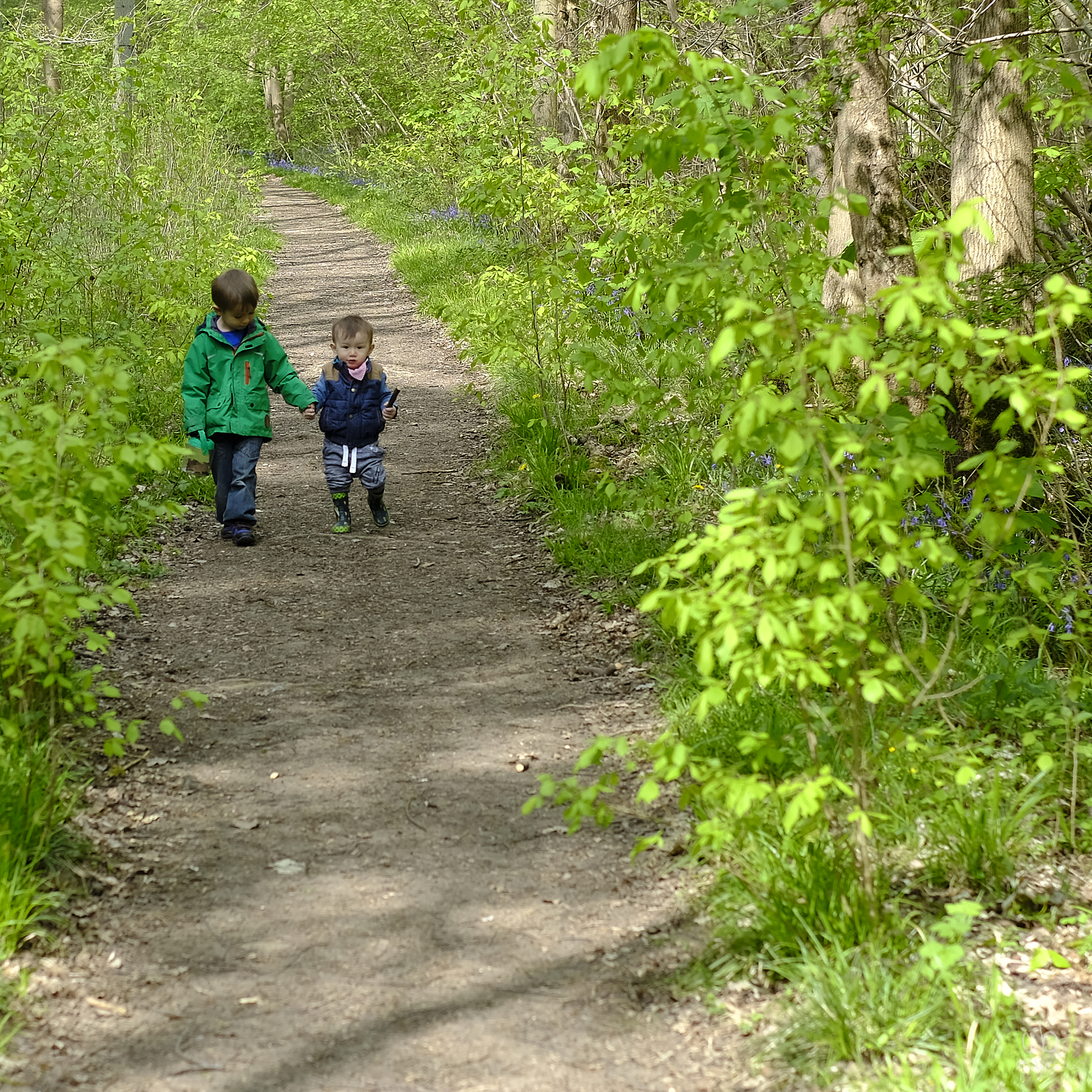 Two small boys walk along a path in the woods, bluebells behind.