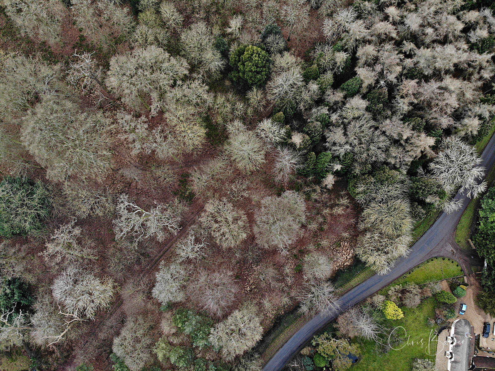 Trees viewed from above by drone