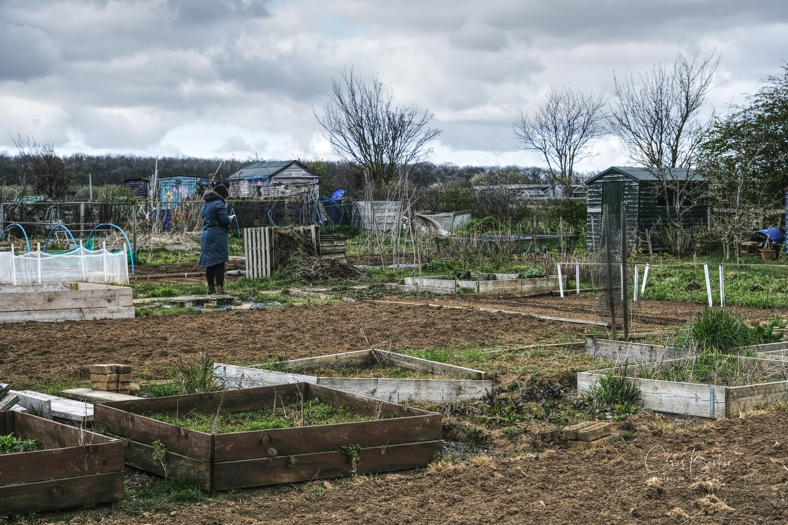 Allotments in the countryside with a lady in a coat