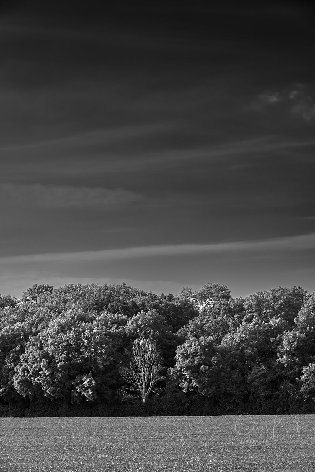 Monochrome image of wood and sky
