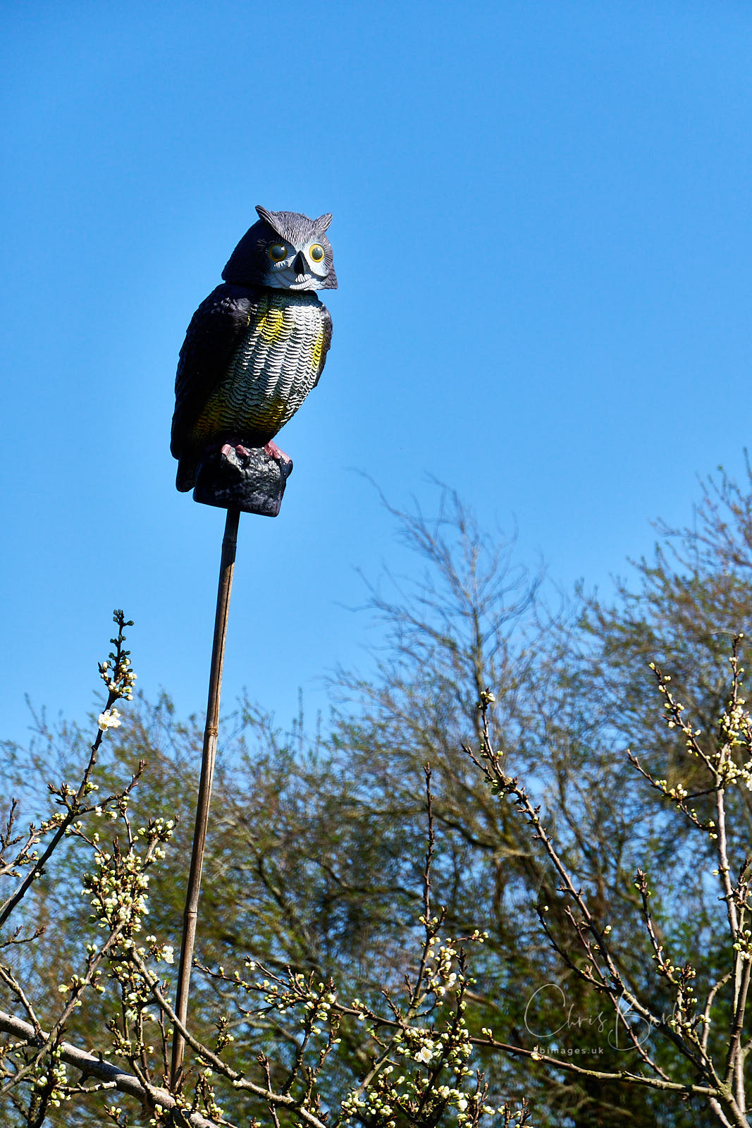 Plastic owl on a stick