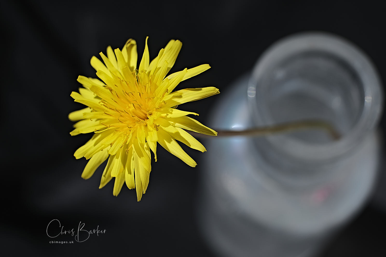 Dandelion flower in a glass jar