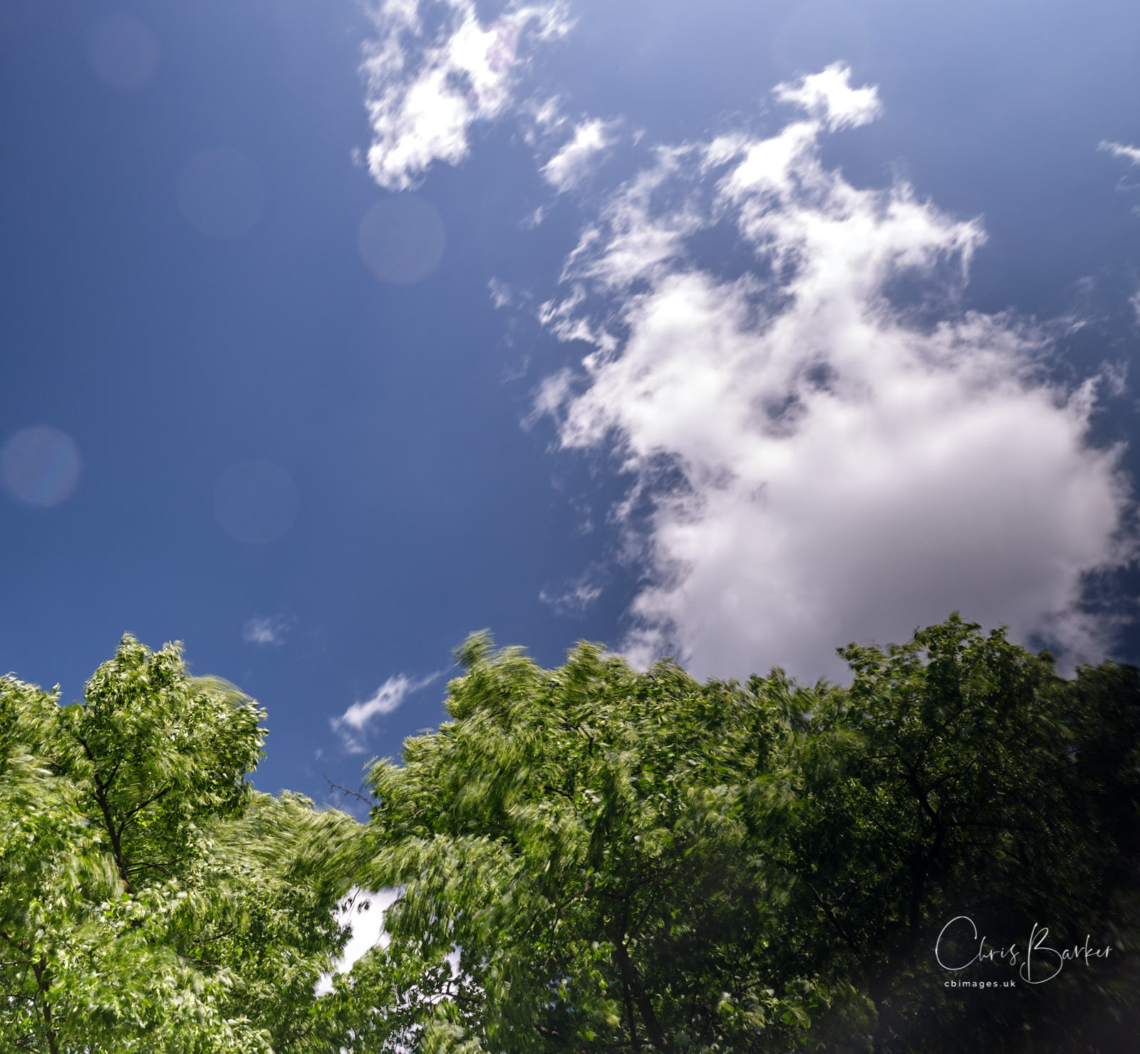 Sky and trees in motion