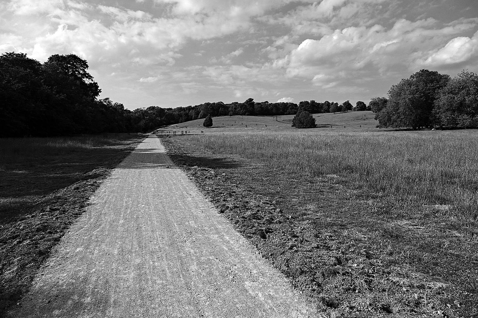 A path runs into the distance in monochrome