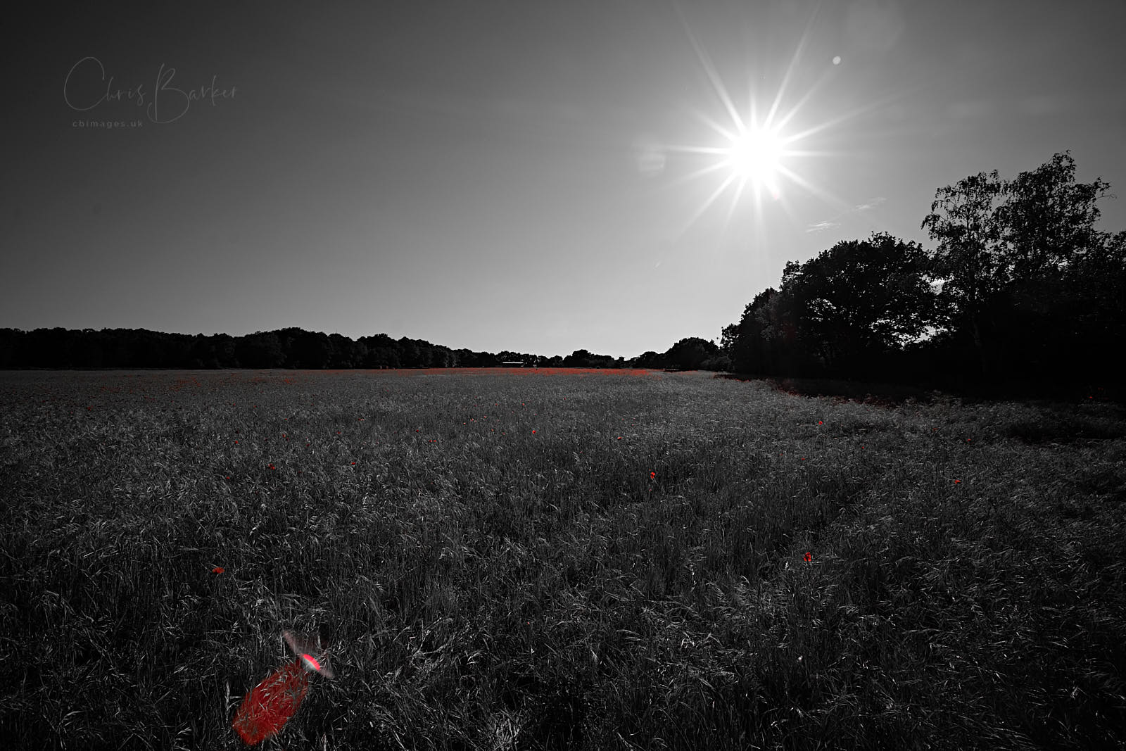 A wide angle photo in monochrome of a field with the sun