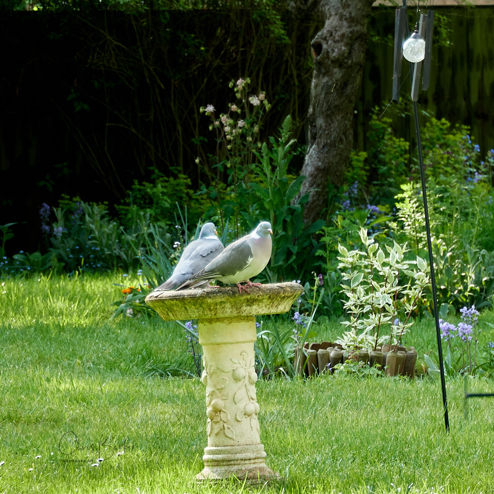 Two pigeons sitting on a bird bath in a garden